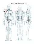 Male - FLATS - body template - lean athletic